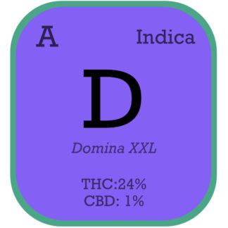 Black Domina XXL